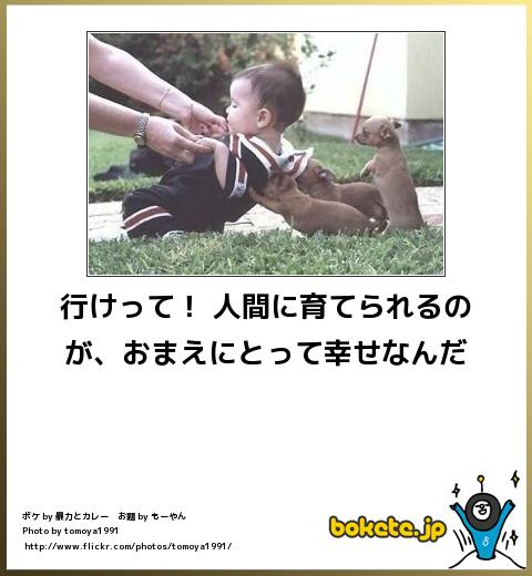 bokete, おもしろ, まとめ, ボケて, 爆笑, 画像2138