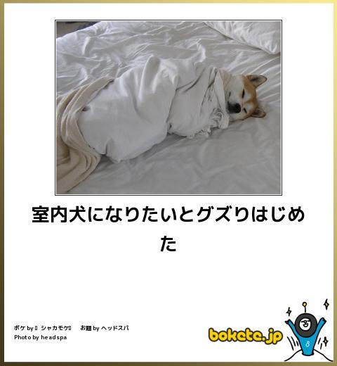 bokete, おもしろ, まとめ, ボケて, 爆笑, 画像2472