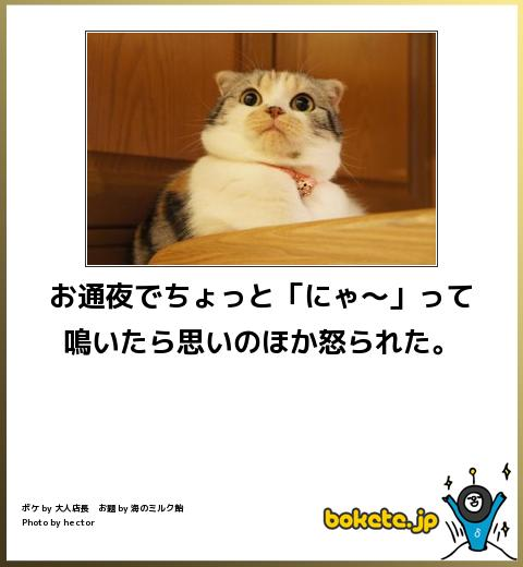 bokete, おもしろ, まとめ, ボケて, 爆笑, 画像2564