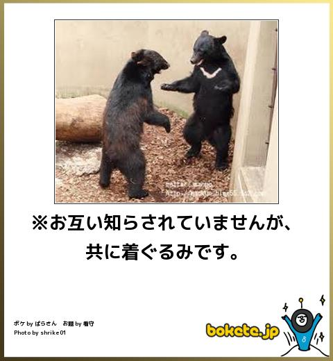 bokete, おもしろ, まとめ, ボケて, 爆笑, 画像2728