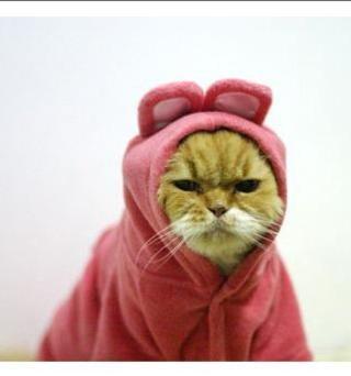 ほんわか,面白,ネコ,画像,まとめ004
