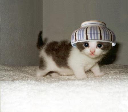 ほんわか,面白,ネコ,画像,まとめ008