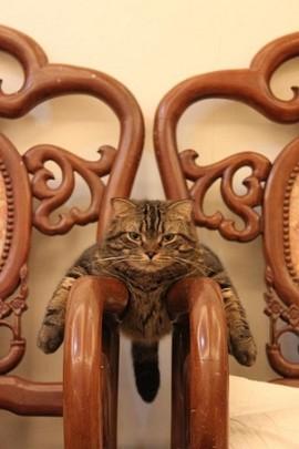 ほんわか,面白,ネコ,画像,まとめ011