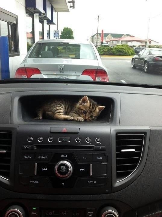 ほんわか,面白,ネコ,画像,まとめ012