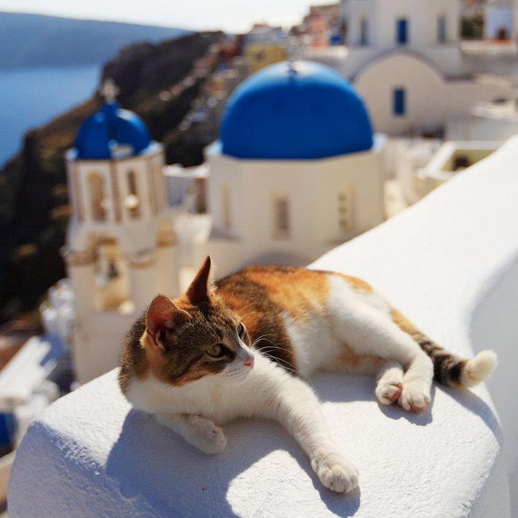 キュート,可愛い,世界,猫,画像,まとめ015