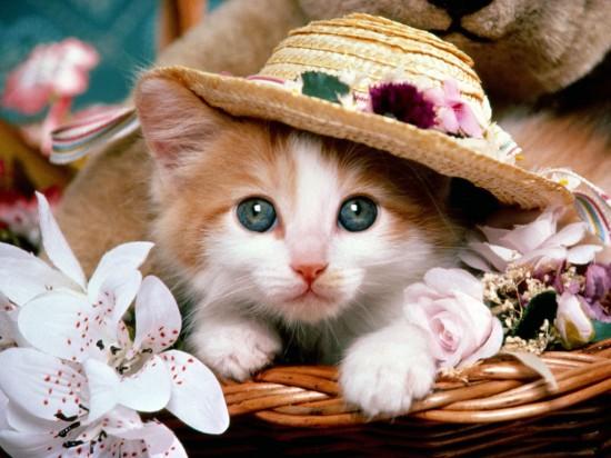 悶絶,可愛い,猫,画像,まとめ020