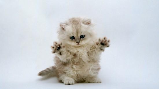 悶絶,可愛い,猫,画像,まとめ028