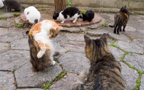 キュート,可愛い,世界,猫,画像,まとめ038