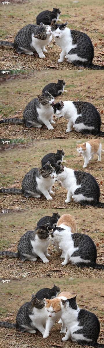 悶絶,可愛い,猫,画像,まとめ040