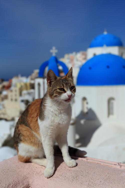 キュート,可愛い,世界,猫,画像,まとめ051