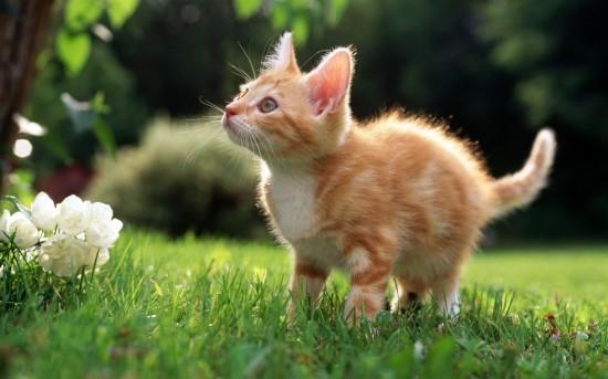 悶絶,可愛い,猫,画像,まとめ121