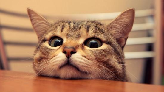 悶絶,可愛い,猫,画像,まとめ133