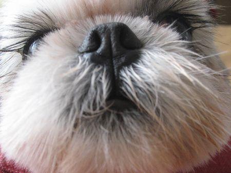 萌える,犬,鼻,画像,まとめ002