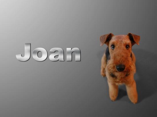 エアデールテリア,犬,可愛い画像,まとめ003