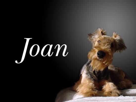 エアデールテリア,犬,可愛い画像,まとめ005