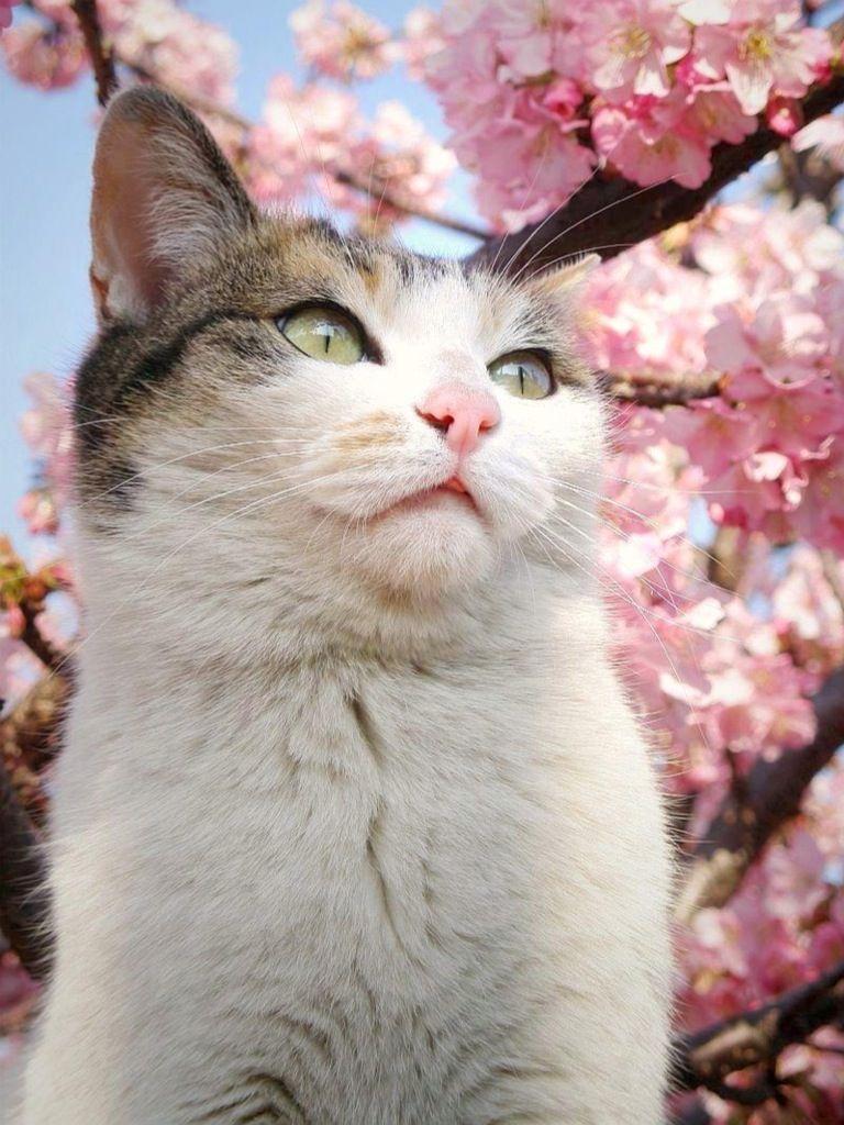 キャワワ,癒し,猫,画像,まとめ008