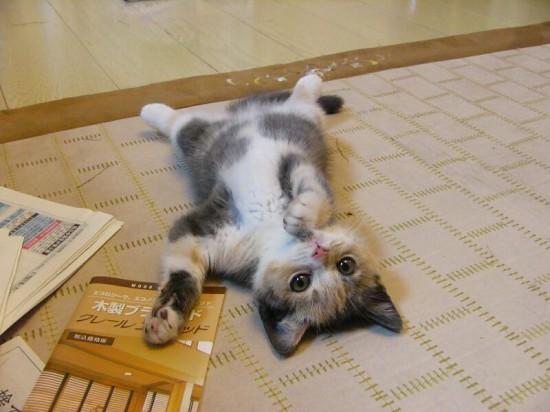 キャワワ,癒し,猫,画像,まとめ010