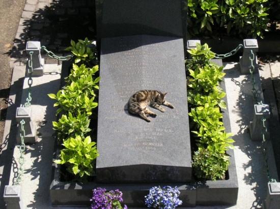 キャワワ,癒し,猫,画像,まとめ014
