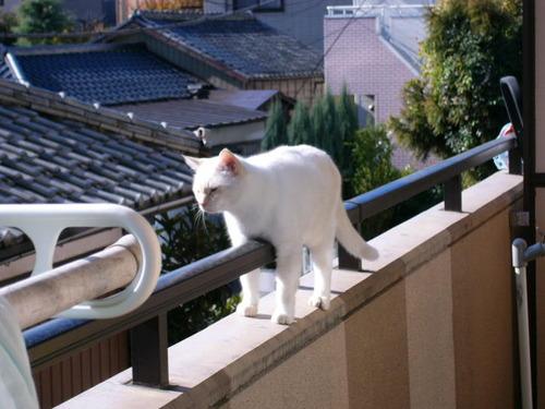 キャワワ,癒し,猫,画像,まとめ022