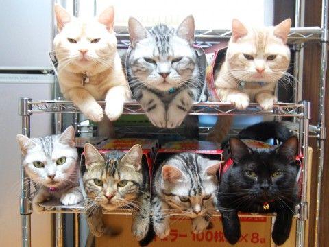 キャワワ,癒し,猫,画像,まとめ024