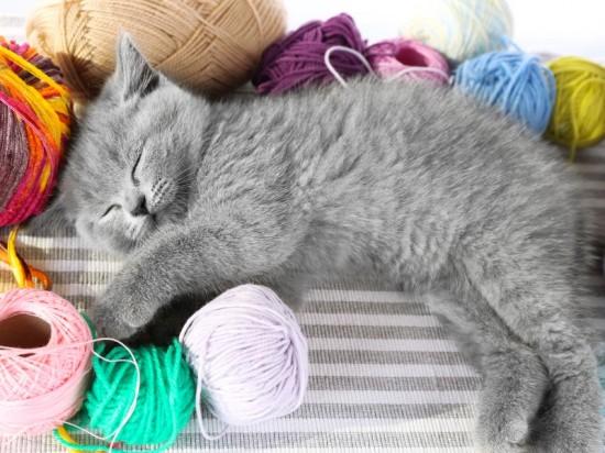 可愛く,子猫,画像00001 (21)