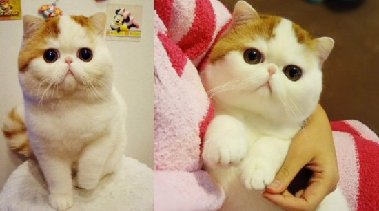 思わず,可愛い,笑った,猫,画像00001 (22)