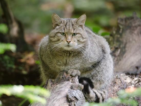 思わず,可愛い,笑った,猫,画像00001 (23)