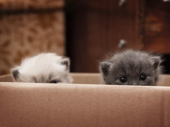 可愛く,子猫,画像00001 (28)