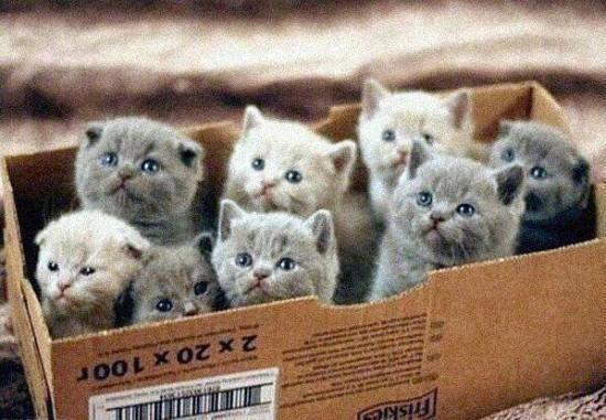 可愛く,子猫,画像00001 (29)