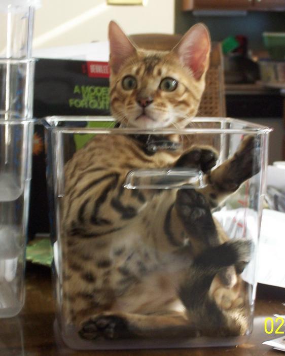 思わず,可愛い,笑った,猫,画像00001 (30)