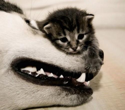 可愛く,子猫,画像00001 (37)