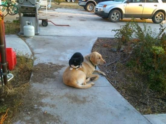仲良し,犬猫,癒される,画像0001 (10)