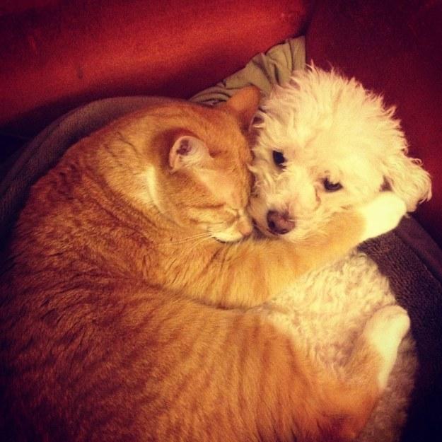 仲良し,犬猫,癒される,画像0001 (1)