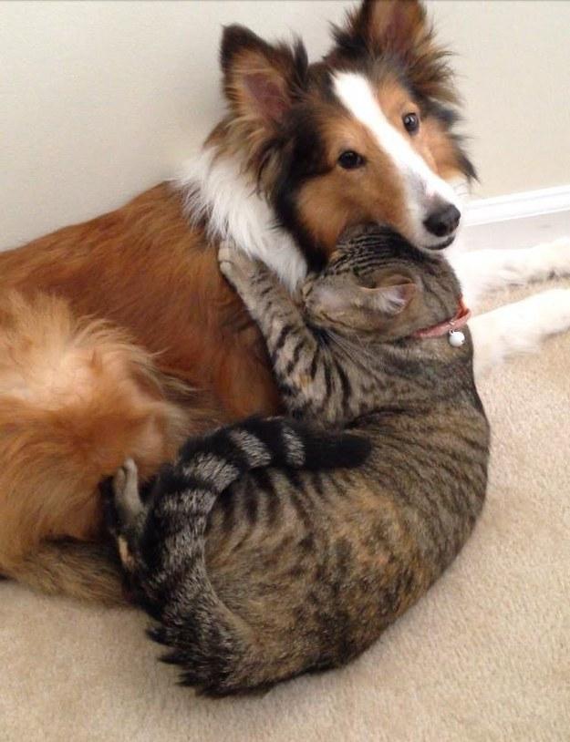 仲良し,犬猫,癒される,画像0001 (4)