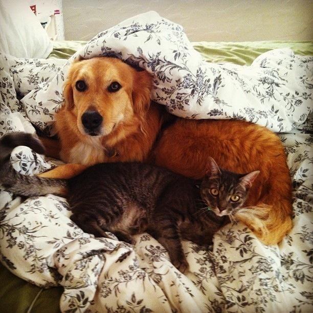 仲良し,犬猫,癒される,画像0001 (6)