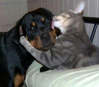 仲良し,犬猫,癒される,画像0001 (7)