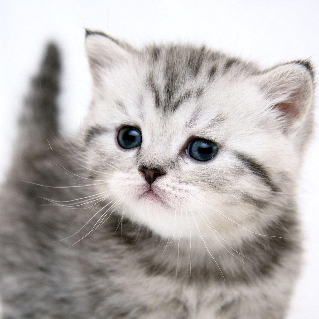 可愛く,子猫,画像0004 (1)