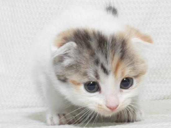 可愛く,子猫,画像001