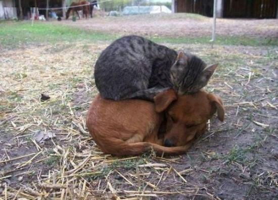 ニヤニヤ,犬,猫,画像001