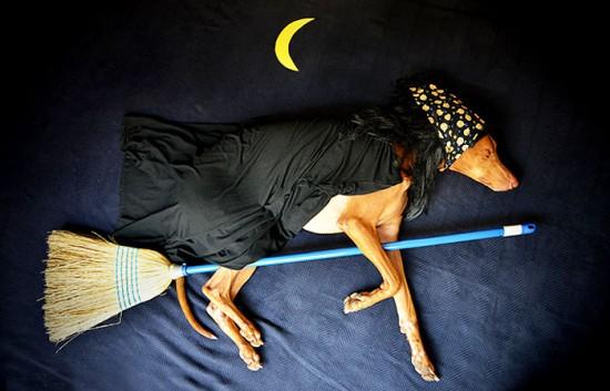 飼い犬,イタズラ,コスプレ,写真,クオリティ,高すぎる,画像001