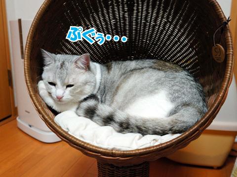 猫,ベッド,画像001