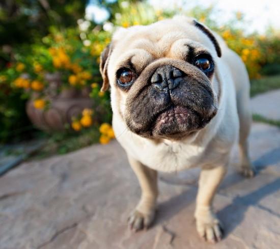 癒し,犬,画像犬002