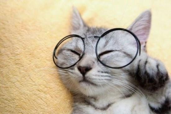 可愛く,子猫,画像002