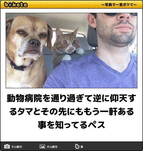 爆笑,可愛く,おもしろい,猫,bokete,画像002