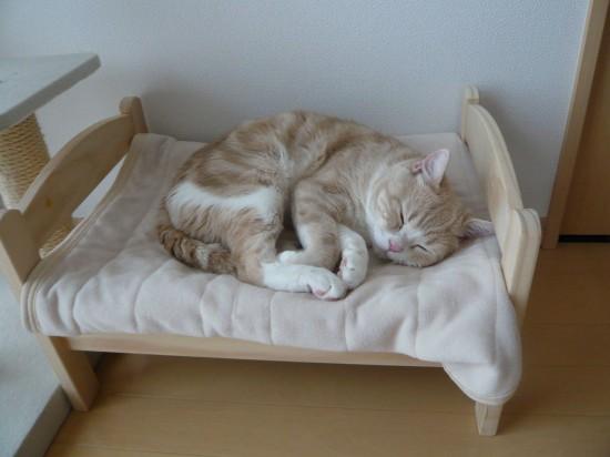 猫,ベッド,画像002