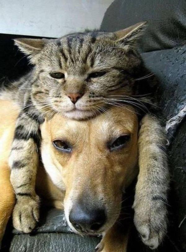 ニヤニヤ,犬,猫,画像002
