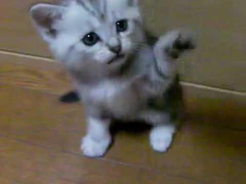 にやけちゃう,可愛い,猫パンチ,画像002