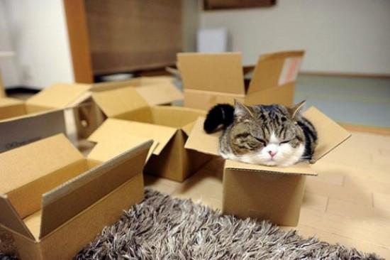 狭い所,大好き,猫,画像002