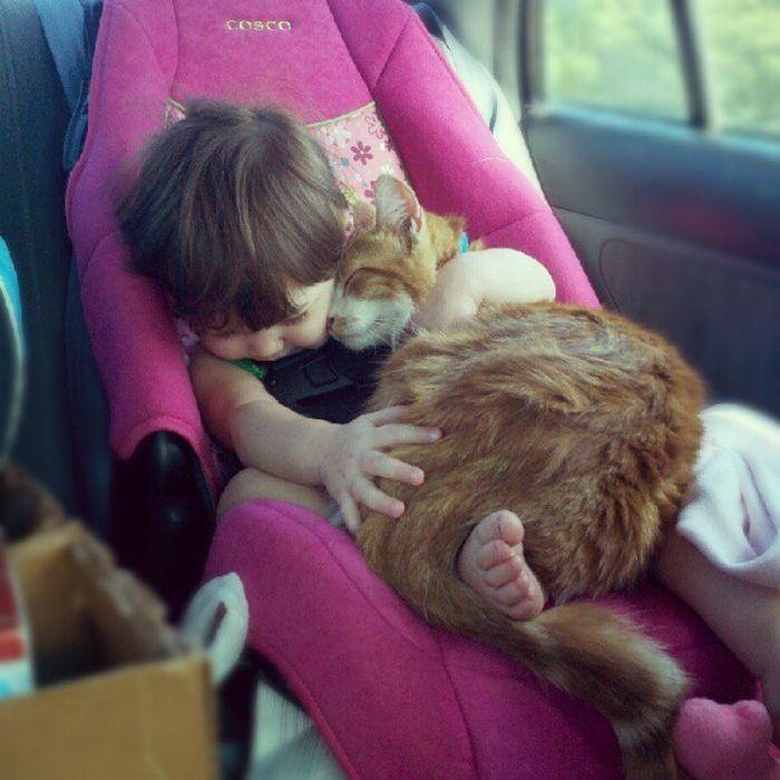 癒されたい,必見,赤ちゃん,猫,仲良し,画像002