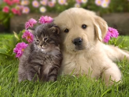 まんまる,お目め,可愛い,犬たち,画像002
